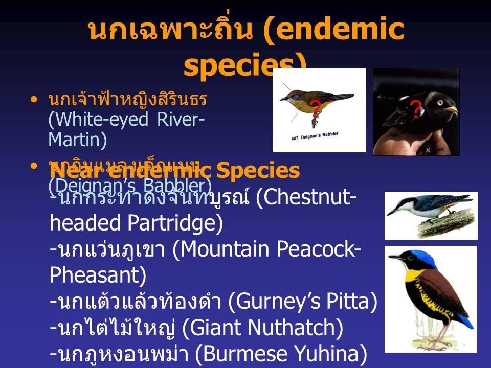 นกเฉพาะถิ่น (endemic species) นกเจ้าฟ้าหญิงสิรินธร (White-eyed River- Martin) นกกินแมลงเด็กแนน (Deignan's Babbler) Near endermic Species - นกกระทาดงจั