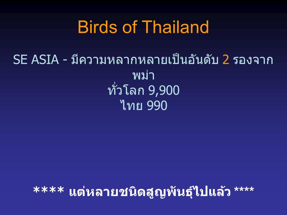 Birds of Thailand SE ASIA - มีความหลากหลายเป็นอันดับ 2 รองจาก พม่า ทั่วโลก 9,900 ไทย 990 **** แต่หลายชนิดสูญพันธุ์ไปแล้ว ****