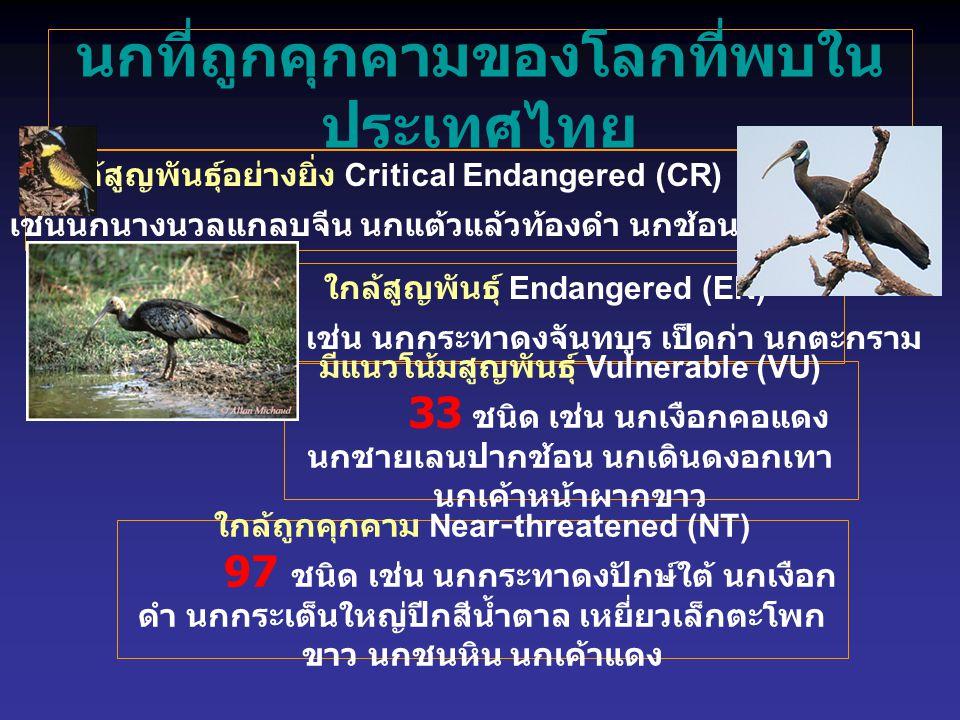 นกที่ถูกคุกคามของโลกที่พบใน ประเทศไทย ใกล้สูญพันธุ์อย่างยิ่ง Critical Endangered (CR) 8 ชนิด เช่นนกนางนวลแกลบจีน นกแต้วแล้วท้องดำ นกช้อนหอยใหญ่ ใกล้สูญพันธุ์ Endangered (EN) 8 ชนิด เช่น นกกระทาดงจันทบูร เป็ดก่า นกตะกราม มีแนวโน้มสูญพันธุ์ Vulnerable (VU) 33 ชนิด เช่น นกเงือกคอแดง นกชายเลนปากช้อน นกเดินดงอกเทา นกเค้าหน้าผากขาว ใกล้ถูกคุกคาม Near-threatened (NT) 97 ชนิด เช่น นกกระทาดงปักษ์ใต้ นกเงือก ดำ นกกระเต็นใหญ่ปีกสีน้ำตาล เหยี่ยวเล็กตะโพก ขาว นกชนหิน นกเค้าแดง