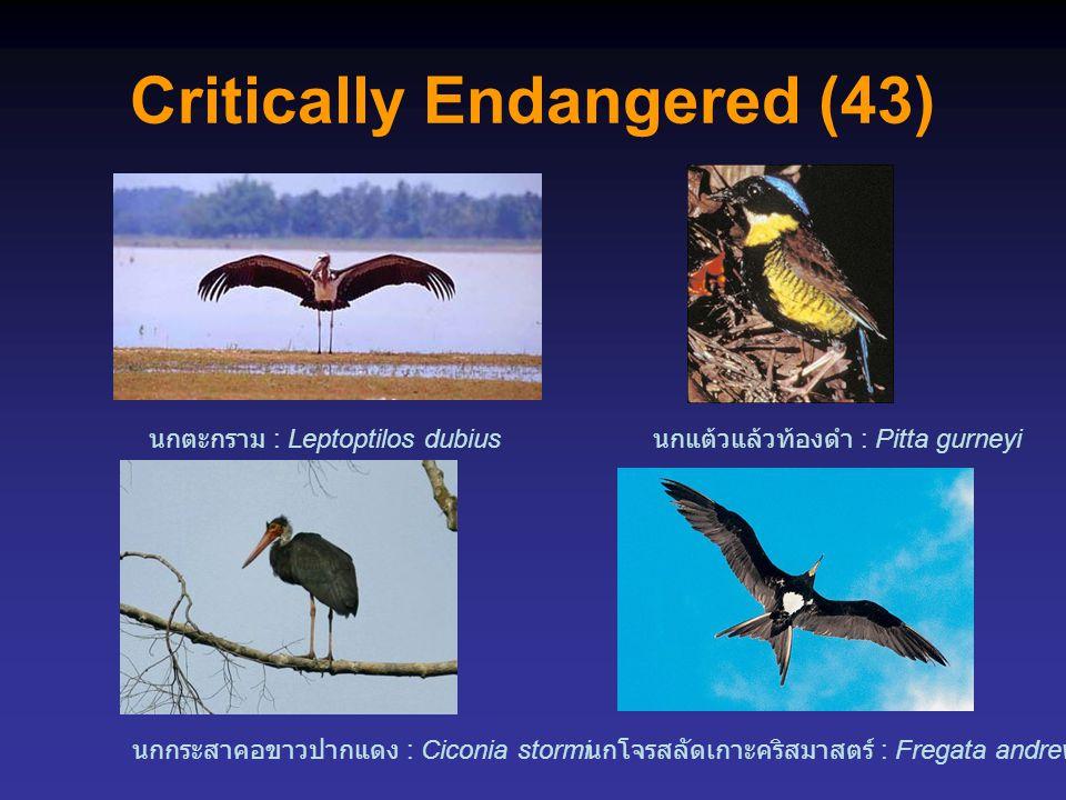 Critically Endangered (43) นกตะกราม : Leptoptilos dubius นกโจรสลัดเกาะคริสมาสตร์ : Fregata andrewsi นกกระสาคอขาวปากแดง : Ciconia stormi นกแต้วแล้วท้องดำ : Pitta gurneyi