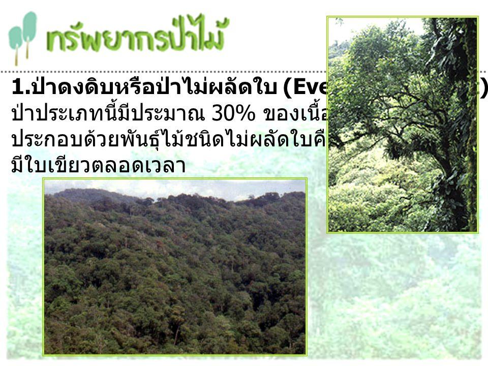 1. ป่าดงดิบหรือป่าไม่ผลัดใบ (Evergreen Forest) ป่าประเภทนี้มีประมาณ 30% ของเนื้อที่ป่าทั้งประเทศ ประกอบด้วยพันธุ์ไม้ชนิดไม่ผลัดใบคือ มีใบเขียวตลอดเวลา