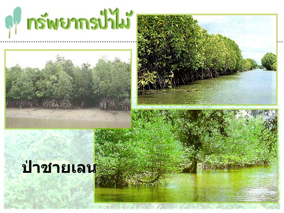 ป่าพรุ เป็นป่าที่ขึ้นอยู่ในบริเวณพื้นที่พรุที่เต็มไปด้วยซากพืชที่กองทับถมกัน ในเวลาที่มีน้ำท่วมขังตลอดทั้งปี พันธุ์พืชในป่าพรุมีทั้งพืชล้มลุก ไม้เถา ไม้พุ่ม ไม้ยืนต้น