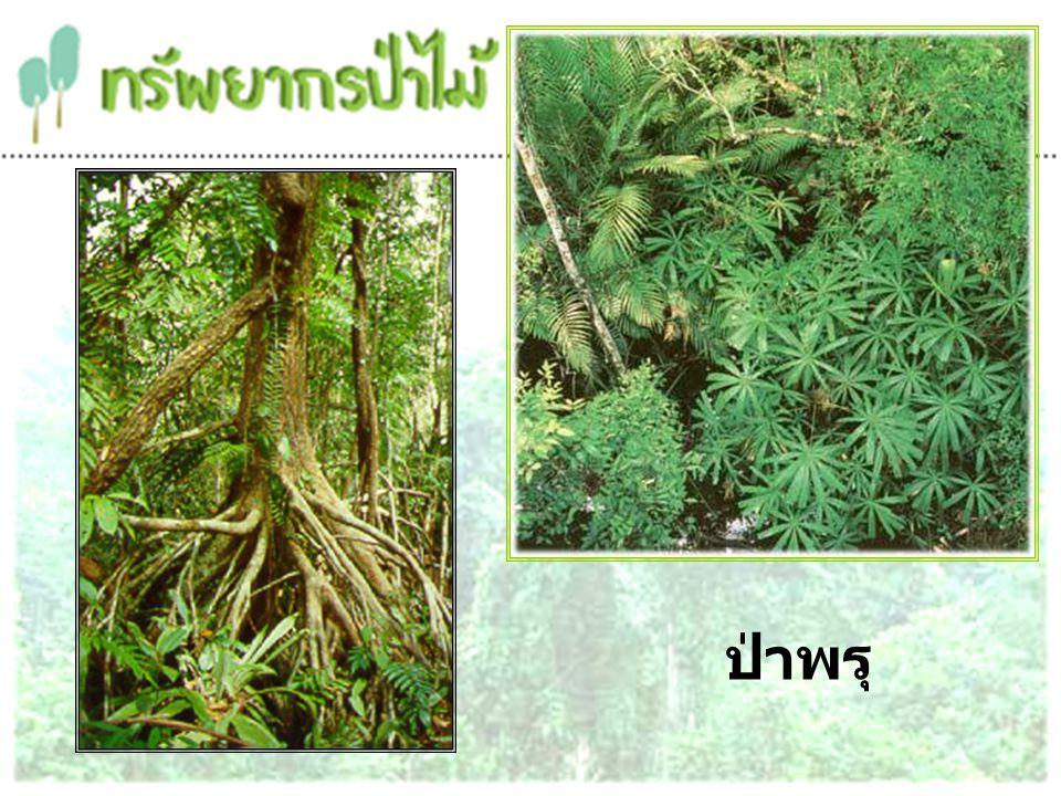 2. ป่าผลัดใบ (Deciduous Forest)