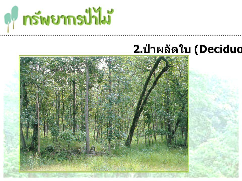 ป่าเบญจพรรณ เป็นป่าไม้ผลัดใบ ที่ต้นไม้ส่วนใหญ่พบทั้งในฤดูร้อน และผลิใบใหม่ในฤดูฝนขึ้นอยู่ทุกภาคของประเทศไทย มีพันธุ์ไม้มีค่าหลายชนิด เช่น ไม้สัก ไม้แดง ไม้ประดู่ ไม้มะค่า