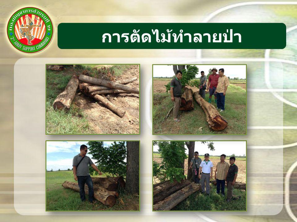 การตัดไม้ทำลายป่า