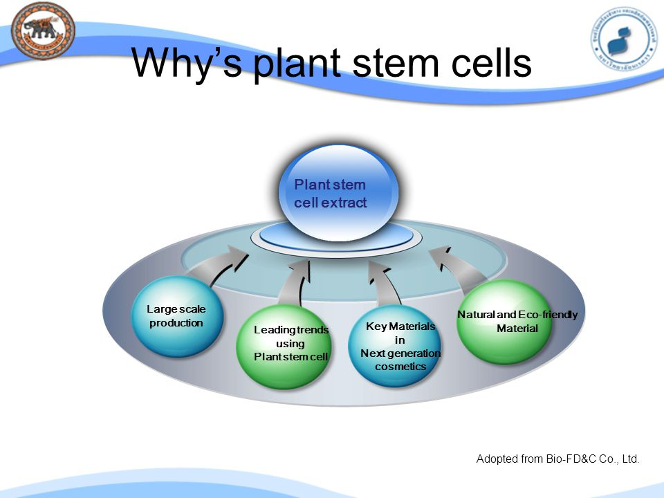 Why's plant stem cells Plant stem cell extract Natural and Eco-friendly Material Large scale production Leading trends using Plant stem cell Key Mater