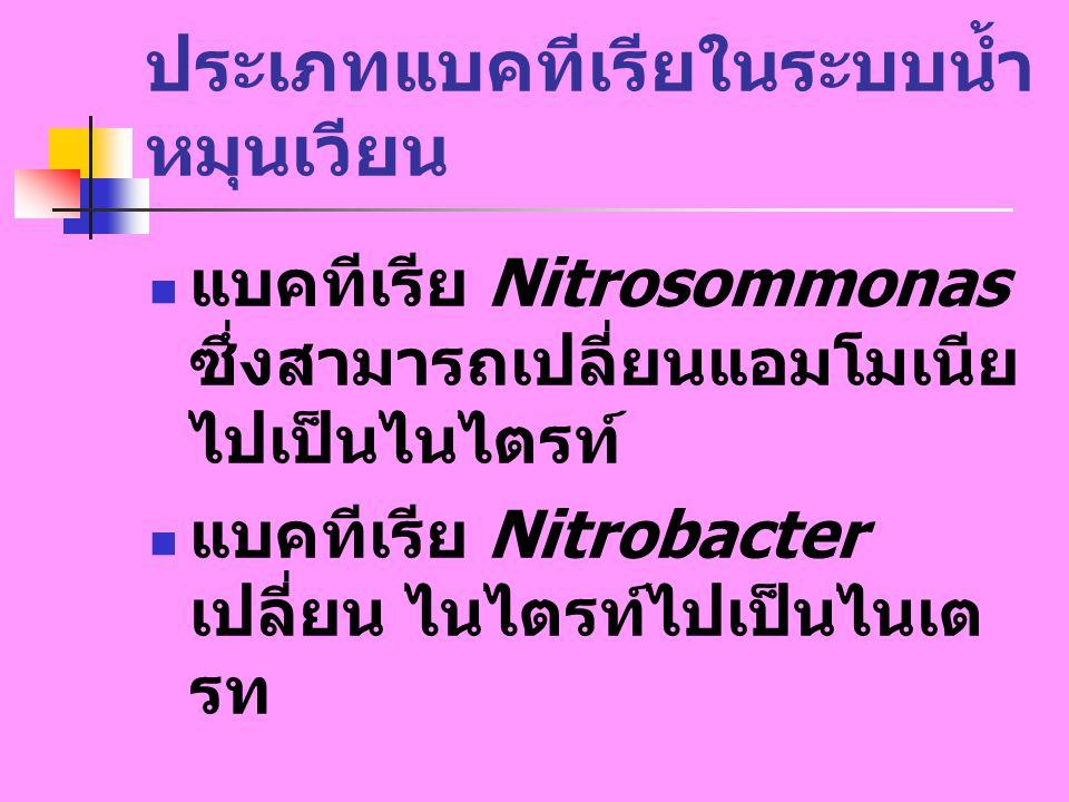 ประเภทแบคทีเรียในระบบน้ำ หมุนเวียน แบคทีเรีย Nitrosommonas ซึ่งสามารถเปลี่ยนแอมโมเนีย ไปเป็นไนไตรท์ แบคทีเรีย Nitrobacter เปลี่ยน ไนไตรท์ไปเป็นไนเต รท