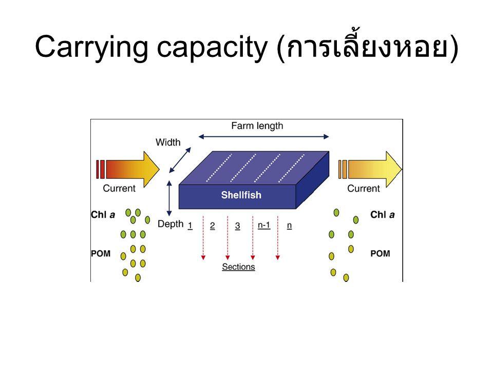 Carrying capacity ( การเลี้ยงหอย )