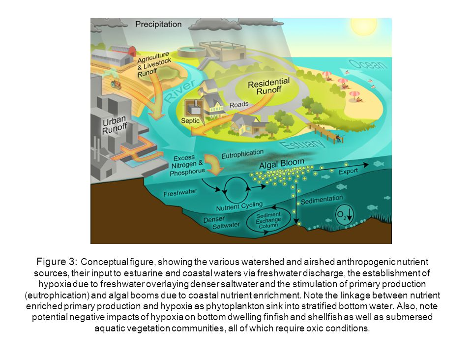 Figure 3: Conceptual figure, showing the various watershed and airshed anthropogenic nutrient sources, their input to estuarine and coastal waters via