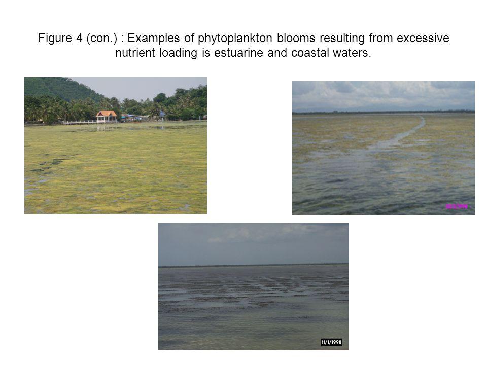 การแพร่กระจายของคลอโรฟิลล์เอใน ทะเลสาบสงขลา ( ข้อมูลเฉลี่ยจากปี 2535-2546) ก.