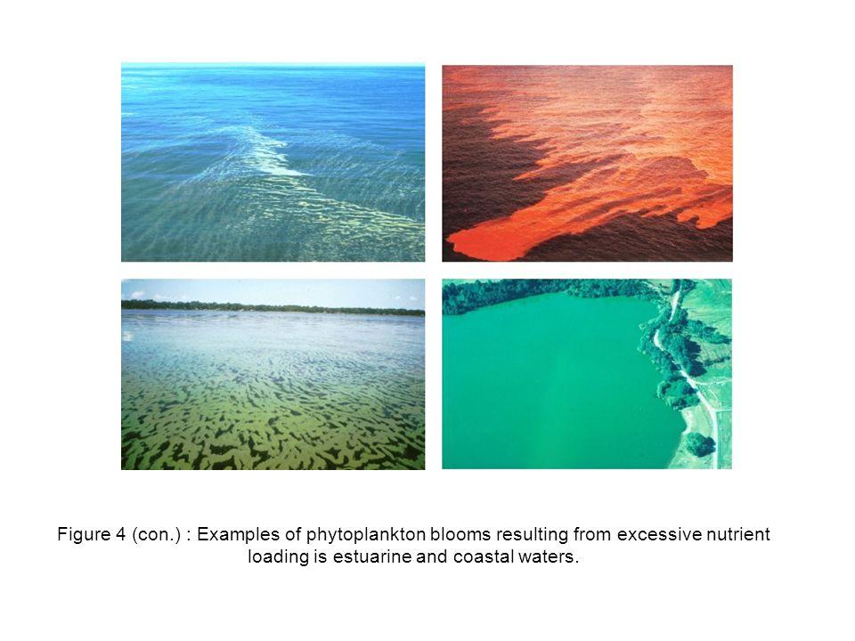 การประยุกต์ใช้ผลผลิตเบื้องต้นในการ เพาะเลี้ยงสัตว์น้ำ Carrying capacity ( การเลี้ยงปลาในกระชัง ) องค์ความรู้ด้านการจัดการสิ่งแวดล้อมและโมเดล การประเมินความ หนาแน่น ข้อมูล กระแสน้ำ, ออกซิเจน ละลาย ความลึก ความหนาแน่นที่ เหมาะสม ข้อมูลการ บริโภค ออกซิเจนของ ปลา
