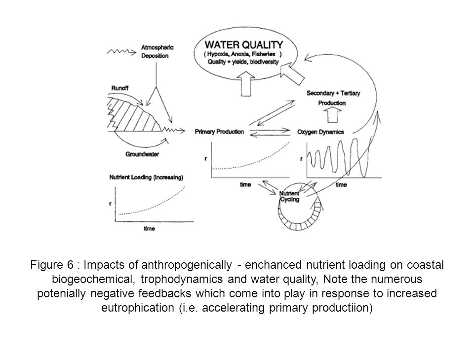 Figure 6 : Impacts of anthropogenically - enchanced nutrient loading on coastal biogeochemical, trophodynamics and water quality, Note the numerous po