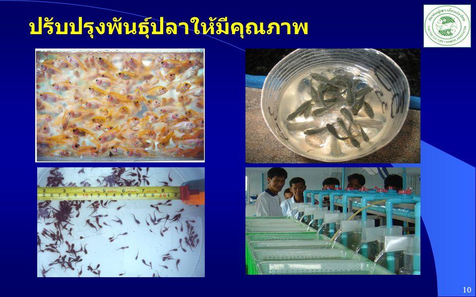 ปรับปรุงพันธุ์ปลาให้มีคุณภาพ 10