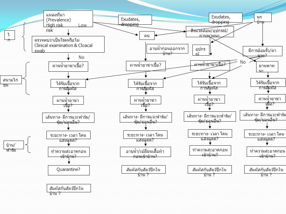 แหล่งที่มา (Prevalence) High risk Low risk ตรวจพบว่าเป็นโรคหรือไม่ Clinical examination & Cloacal swab ผ่านน้ำยาฆ่าเชื้อ ? ได้รับเชื้อจาก การสัมผัส ไ