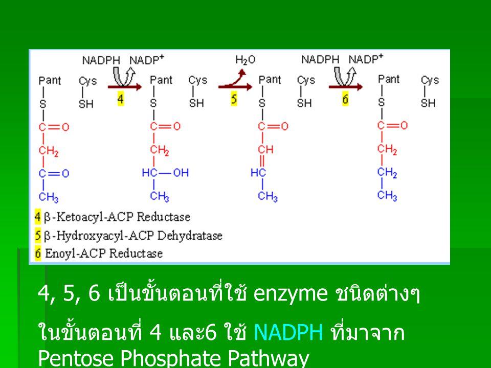 เมื่อจบขั้นตอนที่ 7 จะกลับไปที่ขั้นตอนที่ 2 ใหม่ จำนวน Carbon atom จะเพิ่มขึ้น จนกระทั่งได้ Palmitate (C 16 )