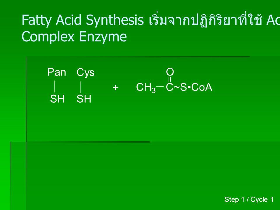 Pan SH Cys S + H C=O CH 3 CH 3 C O ~SCoA HSCoA (Coenzyme A) CoA.SH Step 1 / Cycle 1
