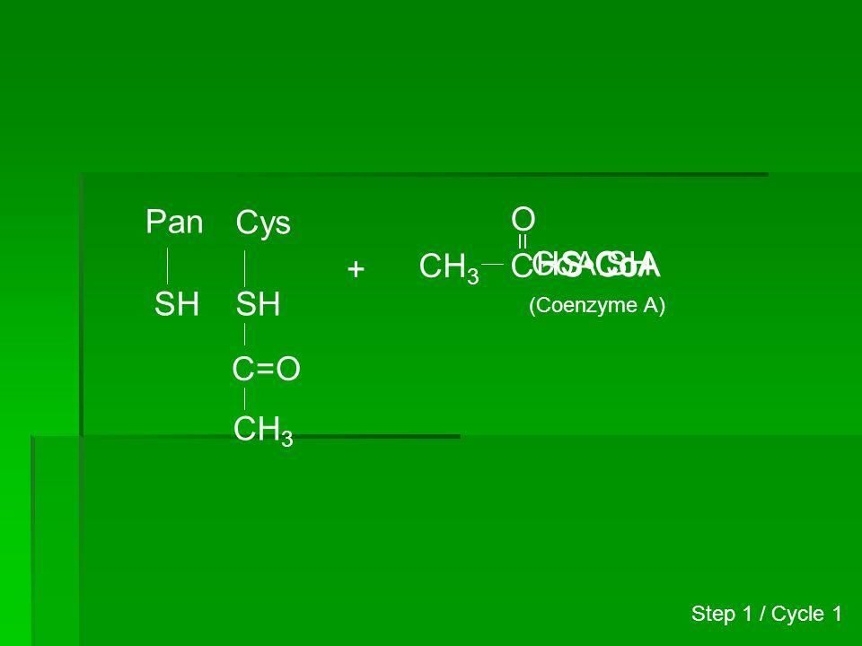 Pan SH Cys S C=O CH 3 + Malonyl-CoA CH 2 C~SCoA O (Malonyl-CoA) HOOC Step 2 / Cycle 1
