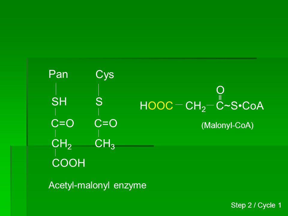 Pan S Cys S C=O CH 3 C=O CH 2 COOH Step 2 / Cycle 1 Acetyl-malonyl enzyme