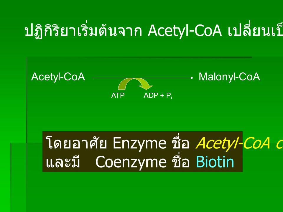 CH 3 C~SCoA O (Acetyl-CoA)