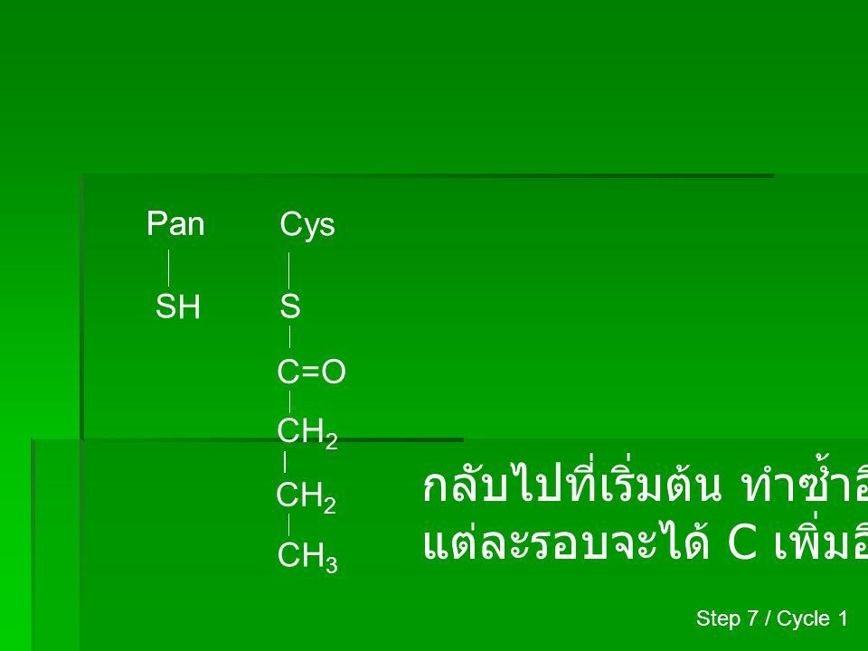 Pan H S Cys S CH 2 CH 3 C=O CH 2 + Malonyl-CoA Step 2 / Cycle 2