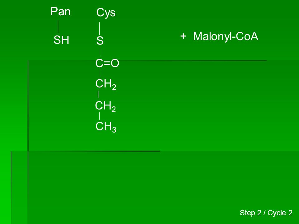 Pan H S Cys S CH 2 CH 3 C=O CH 2 + Malonyl-CoA Step 2 / Cycle 2
