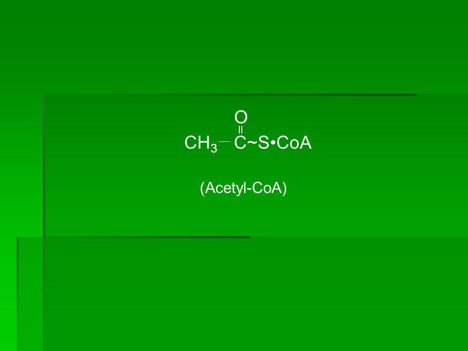 CH 2 C~SCoA O (Malonyl-CoA) HOOC