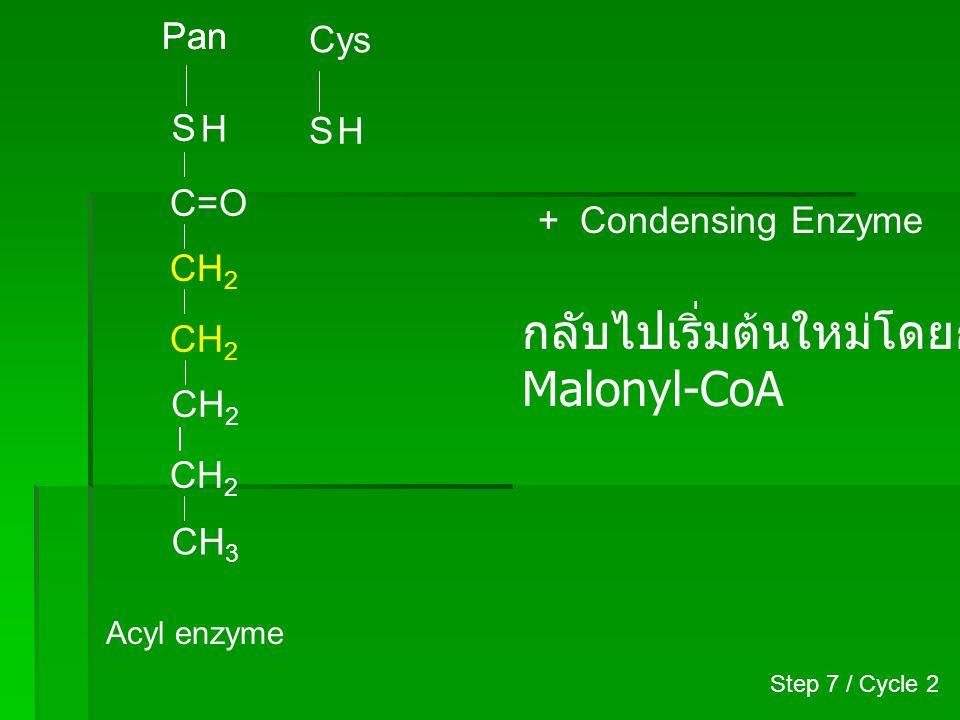 Pan S Cys S CH 2 CH 3 CH 2 C=O CH 2 H CH 2 C~SCoA O (Malonyl-CoA) HOOC Step 2 / Cycle 3