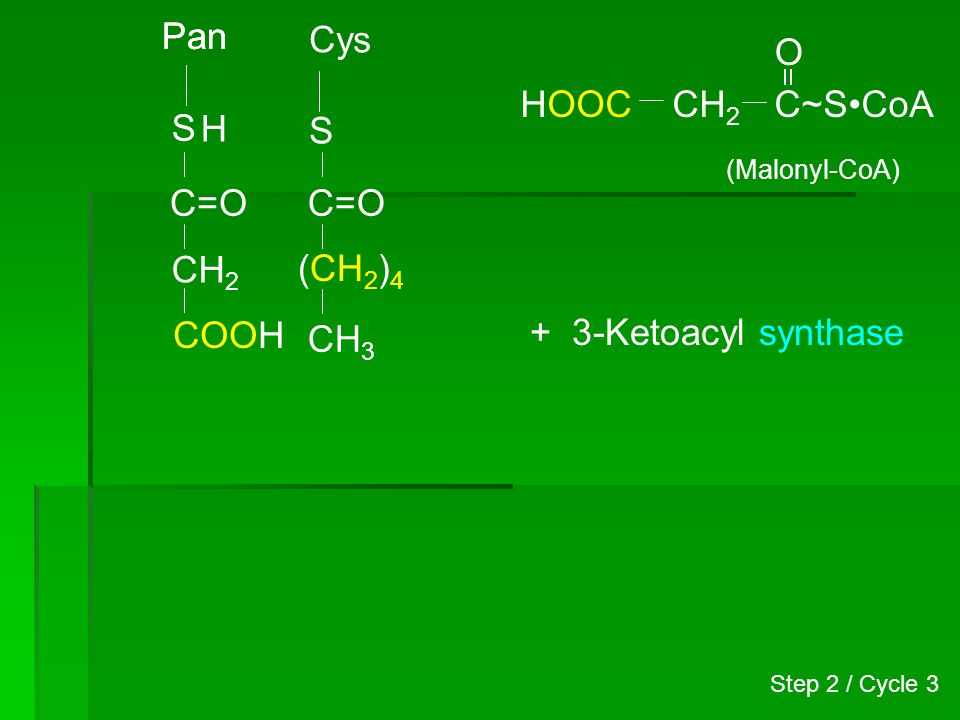 Pan S Cys S CH 3 C=O (CH 2 ) 4 H CH 2 C~SCoA O (Malonyl-CoA) HOOC C=O CH 2 COOH + 3-Ketoacyl synthase Step 2 / Cycle 3