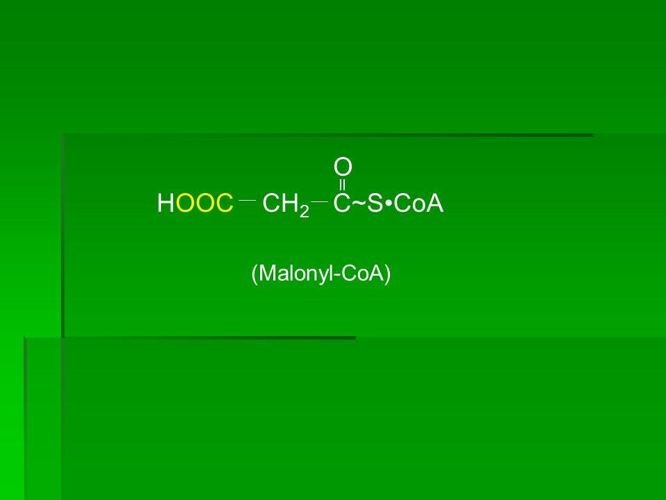 CH 3 C~SCoA O (Acetyl-CoA) CH 2 C~SCoA O (Malonyl-CoA) HOOC Biotin Acetyl-CoA carboxylase