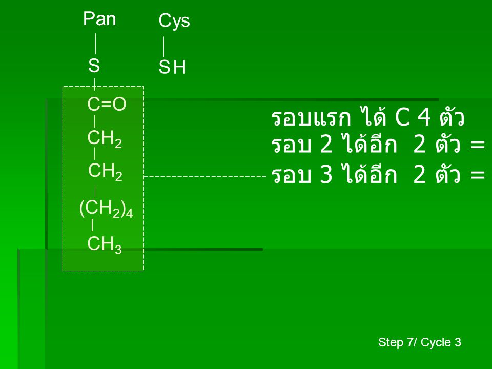 Pan S Cys S CH 3 (CH 2 ) 6 C=O H CH 2 รอบแรก ได้ C 4 ตัว รอบ 2 ได้อีก 2 ตัว = C 6 ตัว รอบ 3 ได้อีก 2 ตัว = C 8 ตัว รอบ 4 ได้อีก 2 ตัว = C 10 ตัว Step 7/ Cycle 4