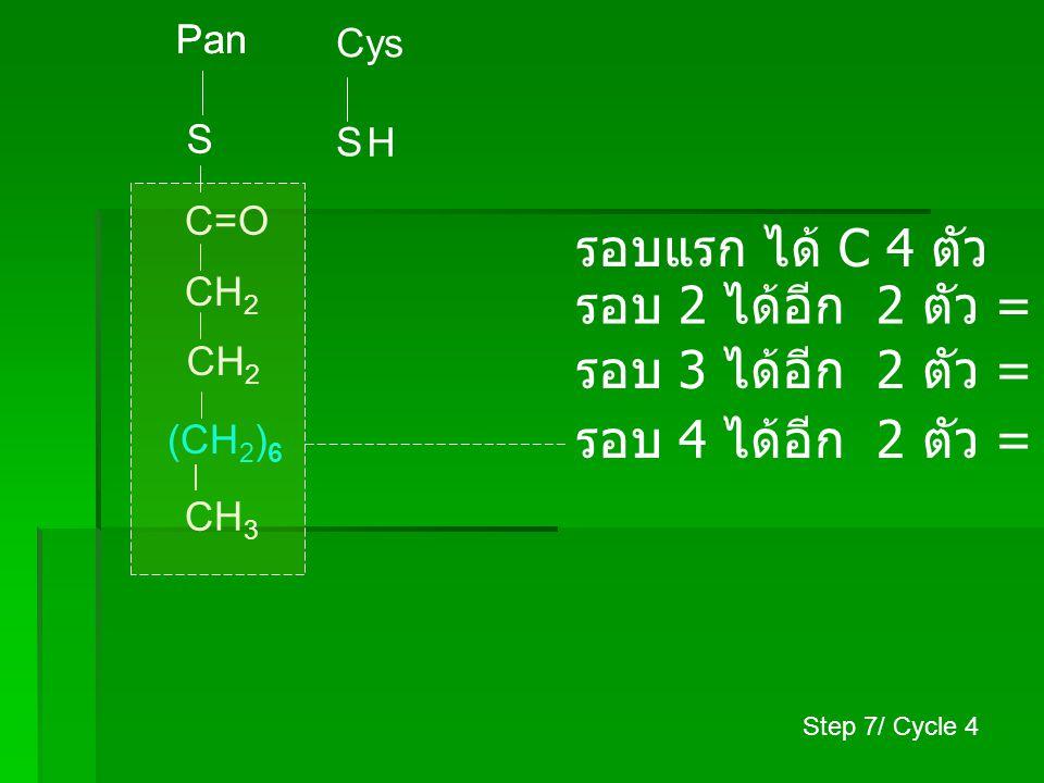 Pan S Cys S CH 3 (CH 2 ) 8 C=O H CH 2 รอบแรก ได้ C 4 ตัว รอบ 2 ได้อีก 2 ตัว = C 6 ตัว รอบ 3 ได้อีก 2 ตัว = C 8 ตัว รอบ 4 ได้อีก 2 ตัว = C 10 ตัว รอบ 5 ได้อีก 2 ตัว = C 12 ตัว Step 7/ Cycle 5