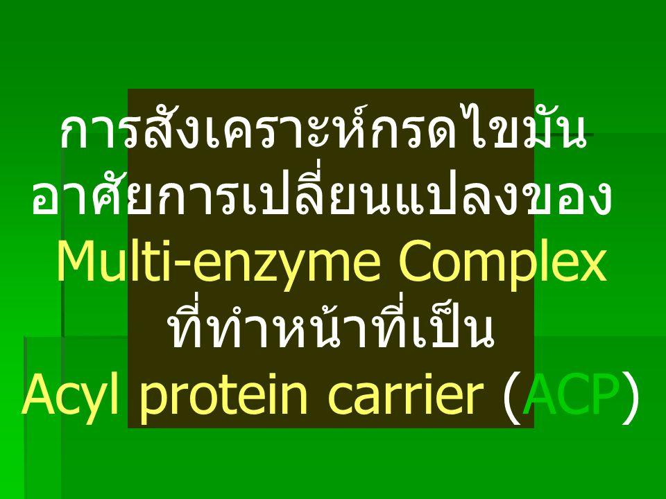 โครงสร้างของ Coenzyme A เขียนโดยย่อว่า CoASH