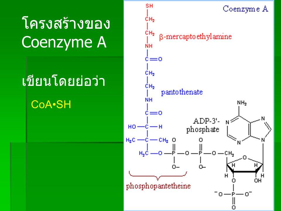 Pan SH Cys SH Fatty Acid synthase multienzyme complex