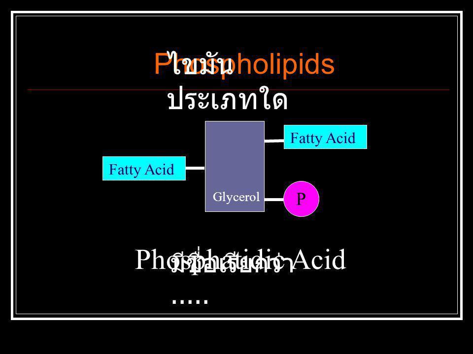 Glycerol Fatty Acid P Phosphatidic Acid Phospholipids ไขมัน ประเภทใด มีชื่อเรียกว่า.....