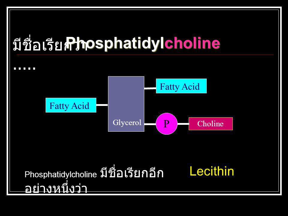Glycerol Fatty Acid P Choline Phosphatidylcholine Phosphatidylcholine มีชื่อเรียกอีก อย่างหนึ่งว่า Lecithin มีชื่อเรียกว่า.....