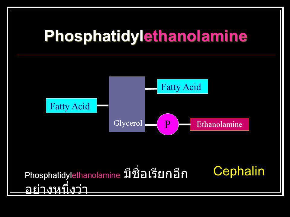 Glycerol Fatty Acid P Ethanolamine Phosphatidylethanolamine Phosphatidylethanolamine มีชื่อเรียกอีก อย่างหนึ่งว่า Cephalin