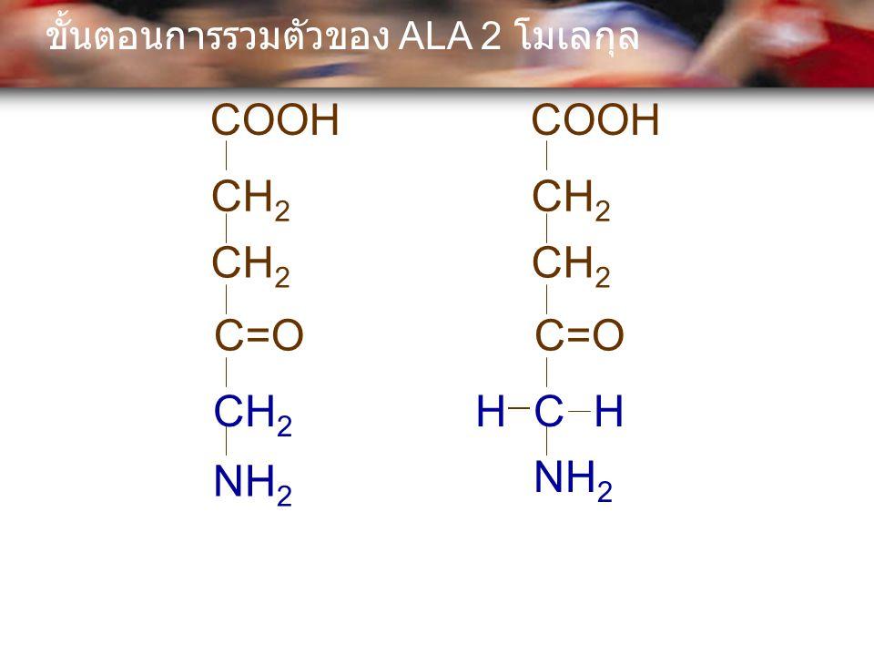 COOH CH 2 C=O CH 2 COOH CH 2 C=O NH 2 CHH ขั้นตอนการรวมตัวของ ALA 2 โมเลกุล