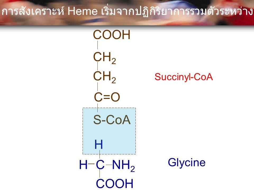 COOH CH 2 C=O S-CoA C NH 2 H H COOH Succinyl-CoA Glycine การสังเคราะห์ Heme เริ่มจากปฏิกิริยาการรวมตัวระหว่าง Succinyl-CoA กับ Glycine