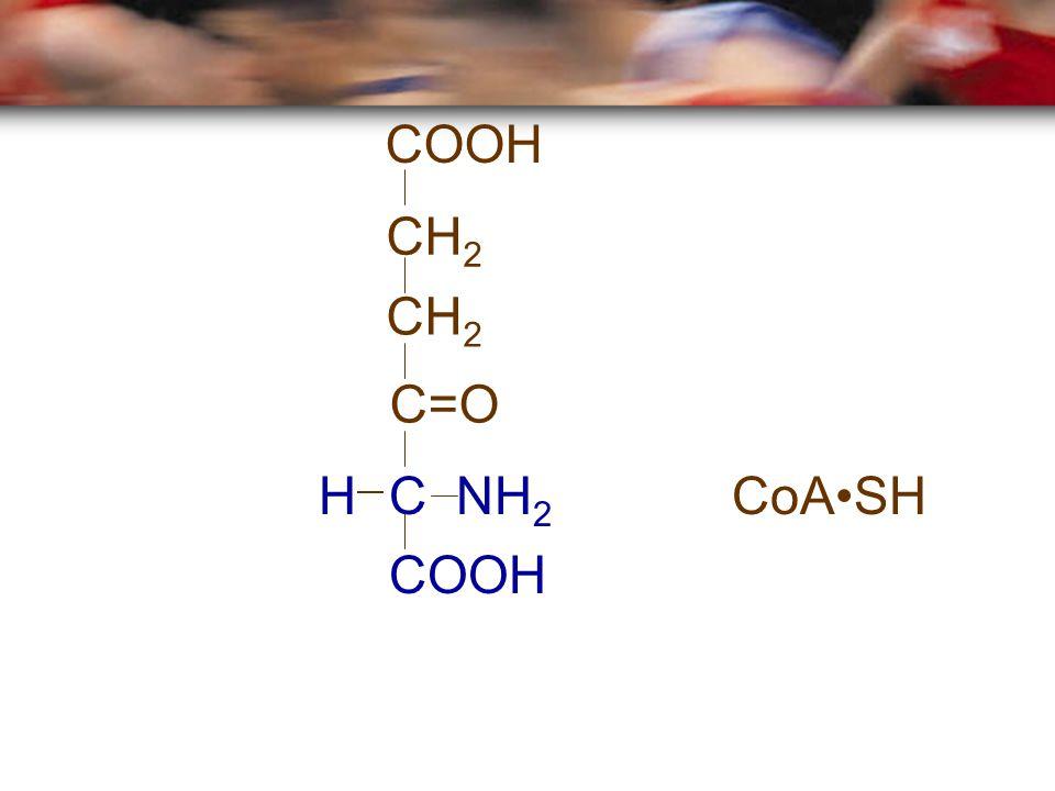 COOH CH 2 C=O CoASH C NH 2 H COOH