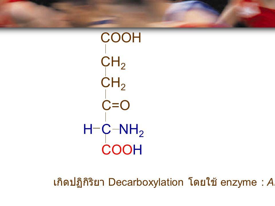 CH 2 C=O C NH 2 H COOH เกิดปฏิกิริยา Decarboxylation โดยใช้ enzyme : ALA synthase