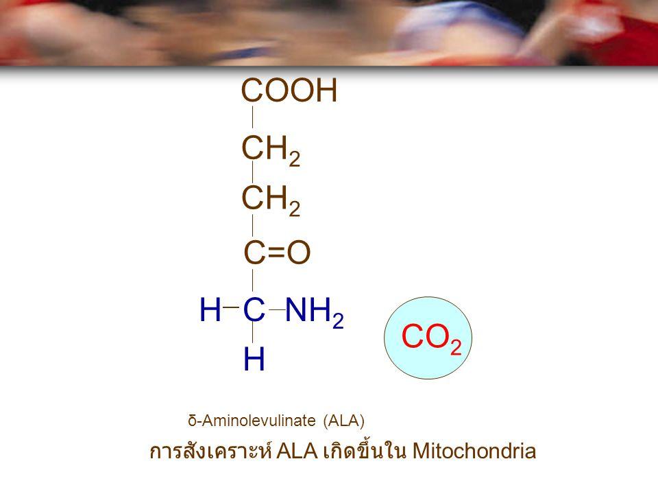 COOH CH 2 C=O C NH 2 H H CO 2 δ-Aminolevulinate (ALA) การสังเคราะห์ ALA เกิดขึ้นใน Mitochondria