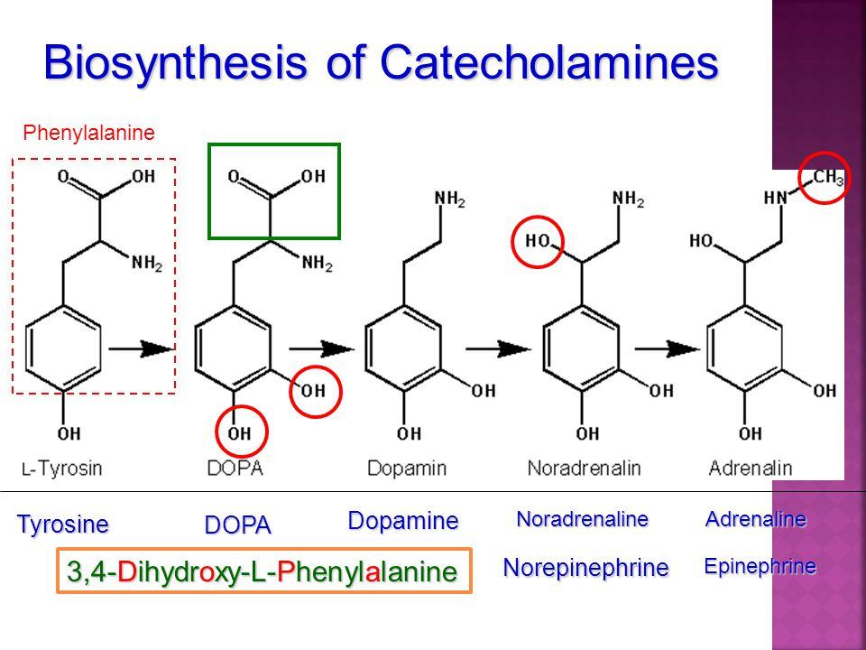 Biosynthesis of Catecholamines Tyrosine DOPA 3,4-Dihydroxy-L-Phenylalanine DopamineNoradrenalineAdrenaline NorepinephrineEpinephrine Phenylalanine