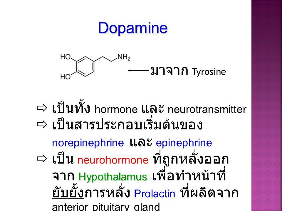  เป็นทั้ง hormone และ neurotransmitter  เป็นสารประกอบเริ่มต้นของ norepinephrine และ epinephrine Hypothalamus  เป็น neurohormone ที่ถูกหลั่งออก จาก