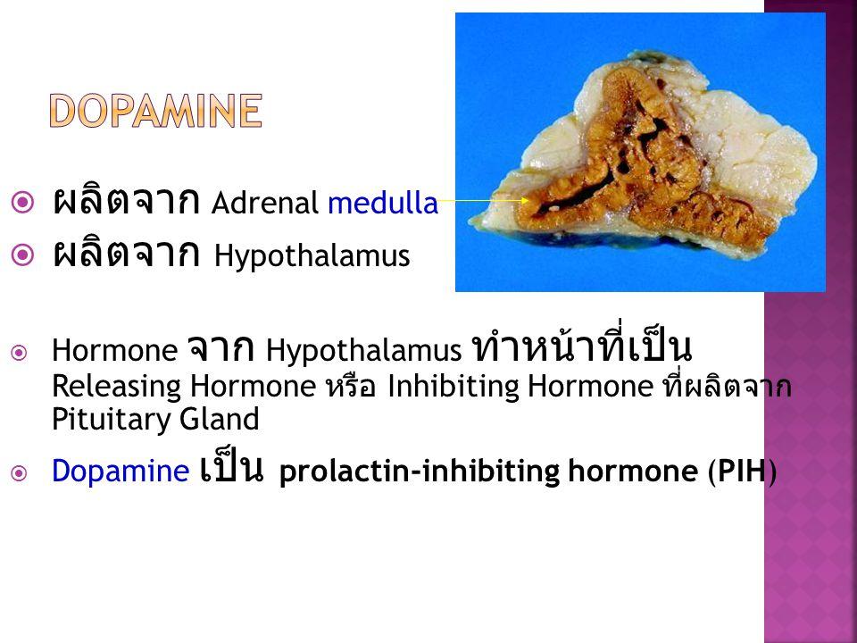  ผลิตจาก Adrenal medulla  ผลิตจาก Hypothalamus  Hormone จาก Hypothalamus ทำหน้าที่เป็น Releasing Hormone หรือ Inhibiting Hormone ที่ผลิตจาก Pituita