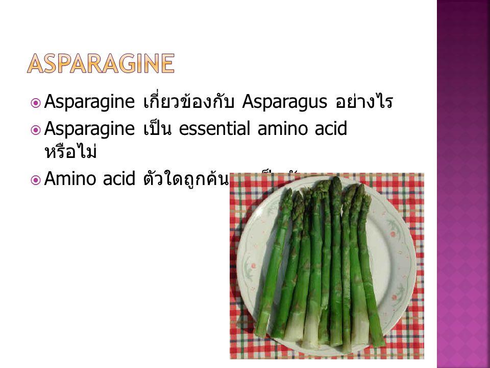  Asparagine เกี่ยวข้องกับ Asparagus อย่างไร  Asparagine เป็น essential amino acid หรือไม่  Amino acid ตัวใดถูกค้นพบเป็นตัวแรก