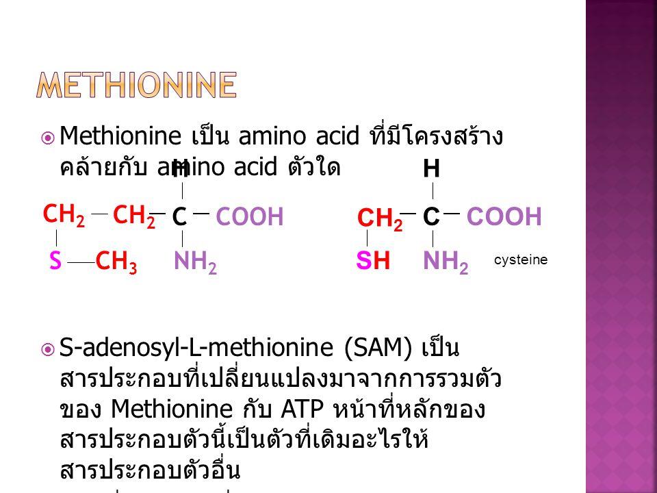  Methionine เป็น amino acid ที่มีโครงสร้าง คล้ายกับ amino acid ตัวใด  S-adenosyl-L-methionine (SAM) เป็น สารประกอบที่เปลี่ยนแปลงมาจากการรวมตัว ของ M
