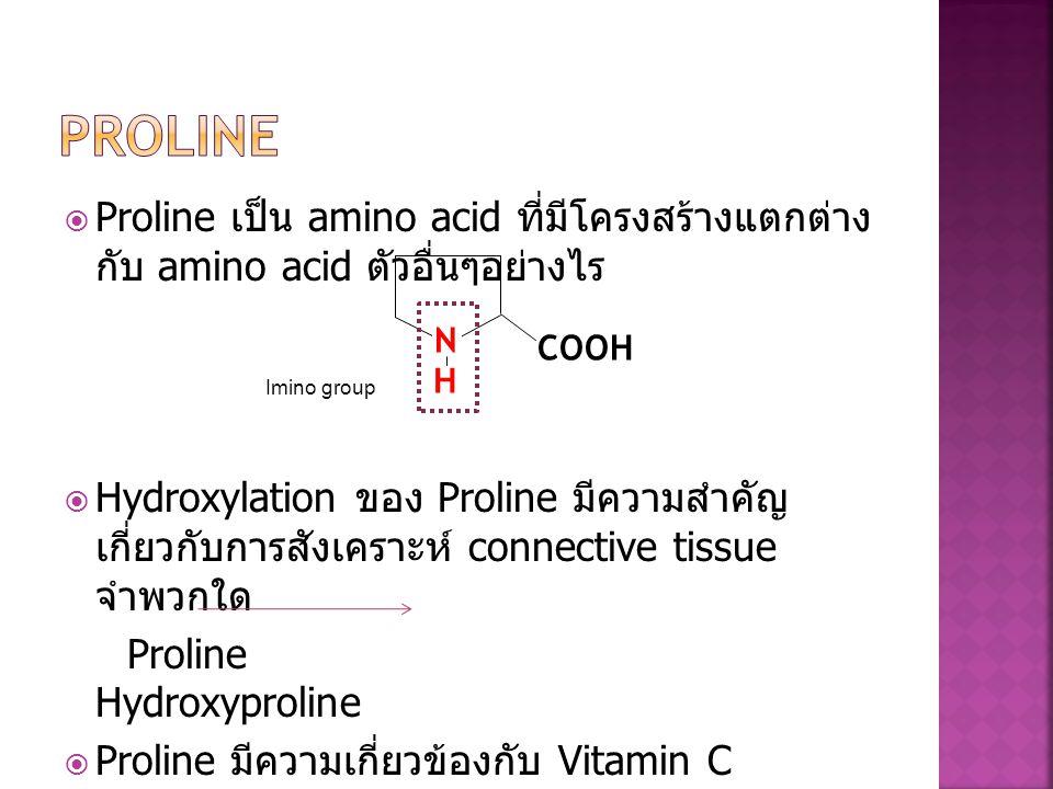  Proline เป็น amino acid ที่มีโครงสร้างแตกต่าง กับ amino acid ตัวอื่นๆอย่างไร  Hydroxylation ของ Proline มีความสำคัญ เกี่ยวกับการสังเคราะห์ connecti
