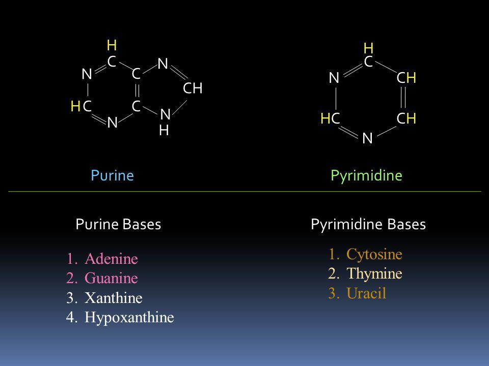 C N C N C C N N CH NH 2 H H C HN C N C C N N CH H2NH2N H O C HN C N C C N N CH O H O H C HN HC N C C N N CH H O AdenineGuanine Xanthine Hypoxanthine Purine Bases