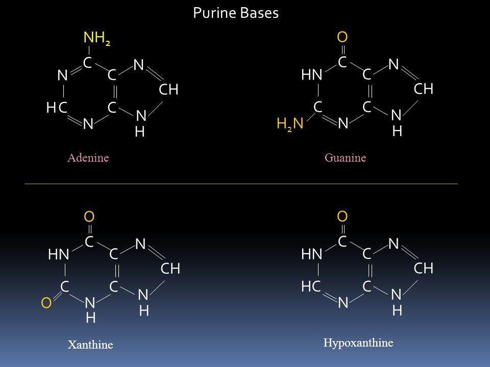 1. สารประกอบใดที่มีโครงสร้าง แบบ Purine ? A) Adenine B) Thymine C) Uracil D) Cytosine