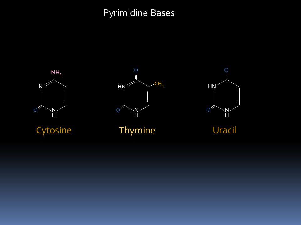 Nucleotides + + Purine Pyrimidine Ribose Deoxyribose Phosphate Nucleosides + Purine Pyrimidine Ribose Deoxyribose